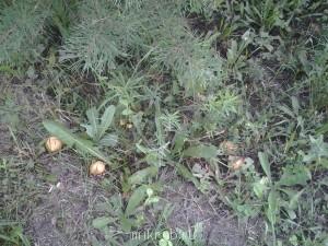 Грибы, ягоды  - Фото0268.jpg