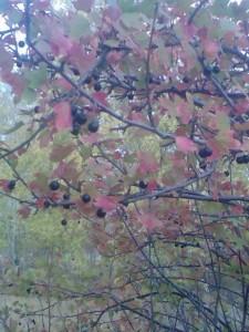 Грибы, ягоды  - Фото006.jpg